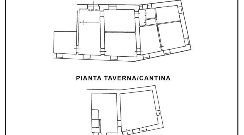 241_Piantine